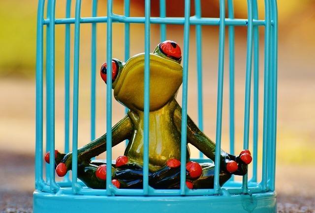 frog-1247177_1280.jpg